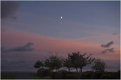 Almost Evening in Ahrenshoop (kurtwolf303) Tags: 2017 ahrenshoop baum bäume deutschland gegenlicht ostsee silhouette wolken sky clouds trees sunset colors farben mond moon olympusem1 omd microfourthirds micro43 systemcamera mirrorlesscamera mft kurtwolf303 germany fischlanddarszingst landschaft landscape europe unlimitedphotos natur nature 250v10f topf25 topf50 500v20f topf75 1000v40f topf100 topf150