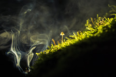 Something different (Köömbroder) Tags: alpha6000 a6000 sony mushroom pilz dust nebel smoke rauch special moos moss nature experiment wendland uelzen stoetze licht light