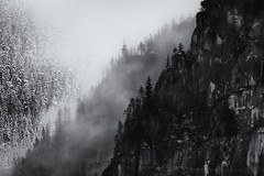 Hello Winter (tristanrayner.com) Tags: green blackandwhite bw fog mist fall autumn winter seasons rain clouds pnw bc british columbia squamish
