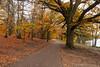 Virginia Water in Autumn-EB160397 (tony.rummery) Tags: autumn autumncolours em10 mft microfourthirds omd olympus path surrey trees virginiawater englefieldgreen england unitedkingdom gb
