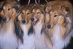 Mostra canina (Zaporogo) Tags: cani