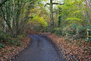 Shoreham Woods Kent