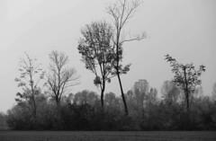 Nostalgia (lincerosso) Tags: paesaggio landscape campagne campagnavenetadipianura novembre autunno coloregigiobellezza armonia nostalgia angoscia