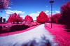 Where Cardinals Hide (Egil Aassved) Tags: aerochrome oslo middelalderparken infrared barcodeoslo infraredfilm nikonf3 norge norway gamleoslo gamlebyen
