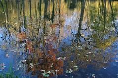 Reflet d'automne. Parc du château de Morsang sur Orge. (jmsatto) Tags: reflet automne parc château morsangsurorge nature hurepoix