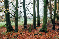 Bound (Andrew Newson) Tags: and2692 borrowedlandscapes woodlands barbedwire trees landscapes