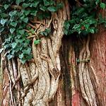 "Cincinnati – Spring Grove Cemetery & Arboretum ""Tree Trunk"" thumbnail"