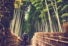 Why do I take pictures? (勇 YoungAdventure) Tags: japan japon nippon 日本 일본 kyoto 京都 교토 bamboo forest 7dwf crazytuesdaytheme whydoyoutakepictures mt