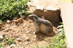 Parc Le Merlet- Les houches (libertephoto) Tags: parc zoo leshouches chamonix savoie