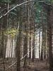 Jesiemmy Las Wald Forest (arjuna_zbycho) Tags: las wald forest spazierendurchderwald walkingthroughtheforest spacerkiempolesie natur drzewa świątyniaprzyrody natura woods uzdrawiającamoclasu leczniczaenergiadrzewiroślin drzewapoprawiająsamopoczucieidziałająleczniczo dendroterapia wienerwald zufusindenwald spacerpolesie walkinthewoods