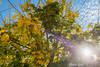 Autumn sun in the tree (Peter Goll thx for +5.000.000 views) Tags: 2017 urlaub schärding österreich austria tree herbst autumn nature natur blatt leave sun sonne travel reise
