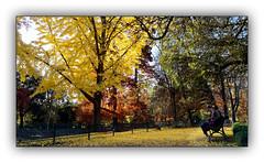 Ballade automnale (Autumn walk) 1 (Jean-Louis DUMAS) Tags: automne autumn feuilles arbre tree colors color couleur paysage landscape parc dxoone