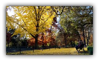 Ballade automnale (Autumn walk) 1