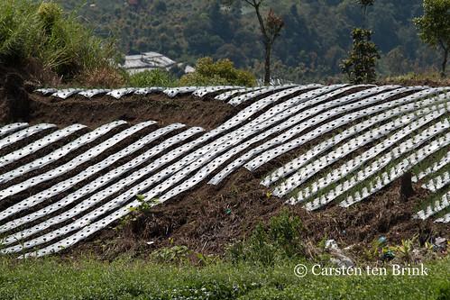 Agriculture near Mt Kerinci
