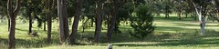 Panorama function from unknown number of shots. (spelio) Tags: sonya6000 new camera test pano apsc a6000 links reference wiki green golf course lakesgolf