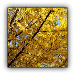 Ballade automnale (Autumn walk) 7 (Jean-Louis DUMAS) Tags: automne autumn feuilles arbre tree colors color couleur paysage landscape parc dxo one ombres lumières explore eau bois lac rivière forêt jardin pelouse