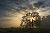 Day Break (Bob Bowman Photography) Tags: tree fog california sonomacounty sun light sunrise landscape oak atmosphere clouds