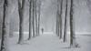 Walking with the dog ... (Alex Verweij) Tags: sneeuw park wandelen almere lumiere alexverweij boom bomen trees winter cold 10dec2017 2017 hond honduitlaten