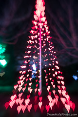 playin with the tree of hearts (Brian M Hale) Tags: tower hill botanic botanical garden winter reimagined night outside outdoors christmas holiday lights boylston ma mass massachusetts bokeh creative lensbaby doubleglass double glass optic brian hale brianhalephoto