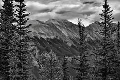 The Side of Mount Rundle Beyond the Trees...(Black & White, Banff National Park) (thor_mark ) Tags: nikond800e lookingeast day2 triptoalbertaandbritishcolumbia banffnationalpark capturenx2edited colorefexpro silverefexpro2 blackwhite mountrundle rockymountains canadianrockies southerncontinentalranges southbanffranges rundlepeaks outside nature landscape overcast mountains mountainsindistance mountainsoffindistance mountainside trees hillsideoftrees evergreens project365 atopsulphurmountain alberta canada
