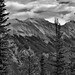 The Side of Mount Rundle Beyond the Trees...(Black & White, Banff National Park)