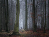 Herbstspaziergang (Petra Runge) Tags: wald herbst nebel weg natur landschaft fog misty woodland forest autumn beeches buchen nature landscape germany deutschland