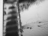 ribs (szélléva) Tags: reflection bnw bnwphotography ribs reflectivewater abstract abstractphotography baja sugovica