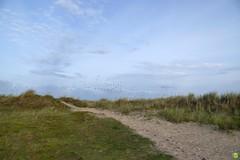 Birds (petrOlly) Tags: europe europa germany deutschland borkum island ostfriesland eastfrisia animals animal bir birds bird landscape nature natura przyroda