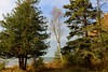 Hog Island Point (Larry Haines) Tags: lakemichigan michigan hogisland campground upperpeninsula water bluesky pine trees birch colors fall