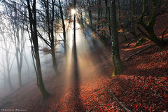 Shining Through (Hector Prada) Tags: bosque niebla fog mist sun forest luz light trees árbol autumn mágico encantado bruma hojas leaves enchanted shining branch paísvasco basquecountry