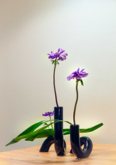Hirosige's Irises by Lilia Grin (Gingertail) Tags: hirosige keiseiikebanaclass sogetsu anemone arrangement associations autumn calla class dance flowers ikebana inspiration iris painting