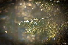20171115003674 (koppomcolors) Tags: koppomcolors skog forest