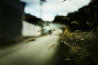 autumn weed