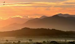 Sunrise (maria xenou) Tags: ελλαδα ελλασ μεσογειοσ στιγμεσ ανατολη φωσηλιου πρωι πεδιαδα τοπιο ουρανοσ συννεφα βουνα πουλια γαληνη ομορφια χρωματα ατμοσφαιρα πελοποννησοσ δεντρα ομιχλη greece griechenland nebel morgens sonnenlicht sonnenaufgang momente moments morning sunlight landscape landschaft morninglight mediterranean peloponnese peloponnes peaceful sky himmel birds vogel fog atmosphere atmosphäre view mountains panorama sunrise