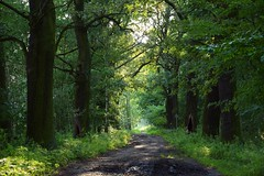 summer moods (JoannaRB2009) Tags: miliczponds stawymilickie lowersilesia dolnyśląsk polska poland nature green path alley avenue tree trees oak oaks mud plants forest woods landscape view summer mood