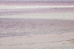 salt lake 15 (interdisciplinaryprojects) Tags: playstead pink lake water potential