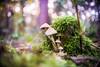 Colour zone (Radosław Owczarczak) Tags: macro industar69 a7 sony m39 oldlens swirl swirlybokeh bokeh colours forest wood autumn