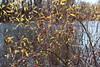 Autumn colors, Rood Bridge Park, Hillsboro OR (nikname) Tags: roodbridgepark hillsboroor stateparks urbanparks autumn autumnscenes autumnlandscapes