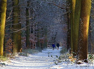 Sunny winter forest