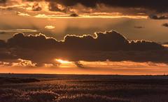 auf dem Darß, deutsche Ostsee (Stefan Giese) Tags: nikon d750 70300mm afp70300mmf4556 dars darss zingst abendhimmel abendrot himmel wolke wolken cloud ostsee meinigenbrücke