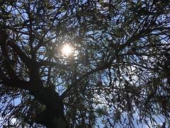 Tarde de sol ([Anderson Reis]) Tags: quintal casa tarde sol brasil brazil beautiful lindo
