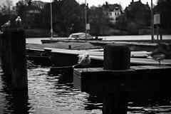 Lübeck 2017 (hudsonleipzig80) Tags: lübeck norden schleswigholstein hansestadt ostsee schiffe schifffahrt schiff hafen boot boat outdoor canon canoneos1200d eos1200d eos 1200d blackwhite bw umwelt umweltschutz harbour