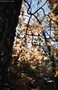 Rich softness. (Chad M. Lane) Tags: wildlife nature outdoors traveling tamron1530mmf28vc nikon nikond810 wideangle 30mm beautiful fall fallcolors moss oak leaves leaf sun sunburst starburst blue bokeh shallowdof hiking enjoy love life lowpro