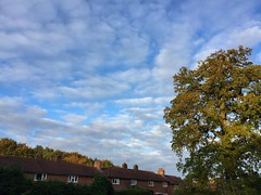 Clouds (Marc Sayce) Tags: clouds park close oak tree autumn november 2017 alice holt forest hampshire south downs national