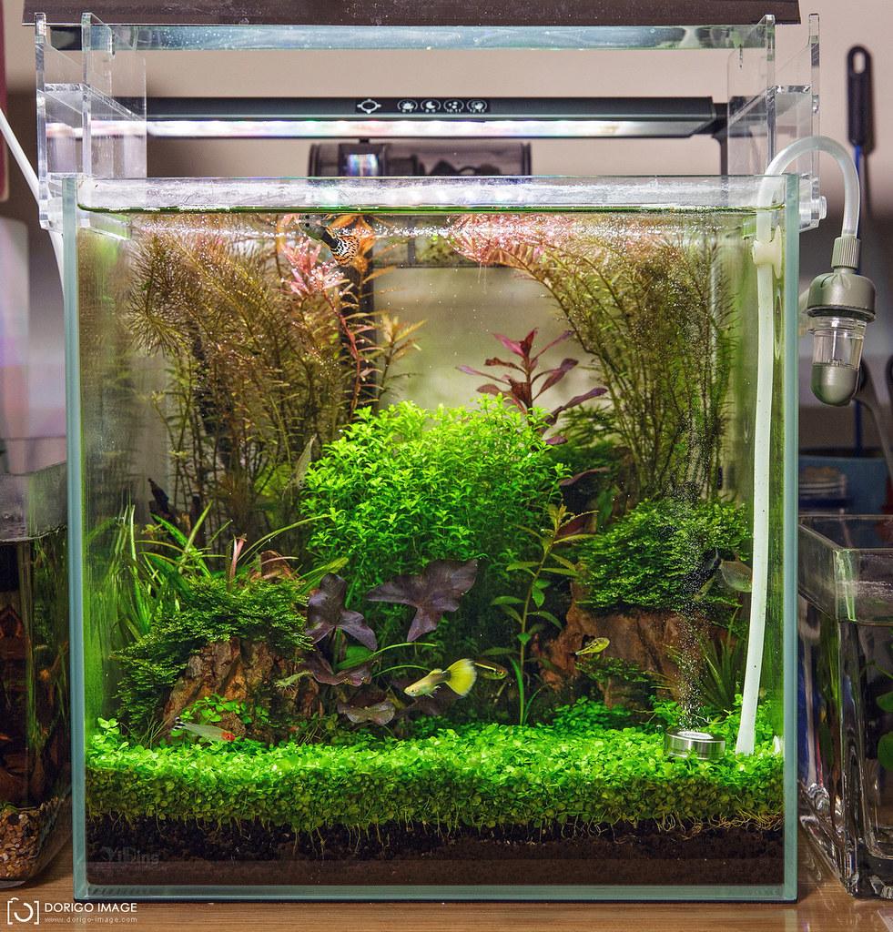 一呎30立方水草缸 夏風造景
