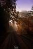 La luce (Danilo Agnaioli) Tags: autunno canon6d italia umbria perugia strade luce alberi rosso