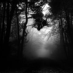 Walkin in the mist (erictrehet) Tags: extérieur fullframe lumière illeetvilaine nikon nikkor d610 light monochrome dark fog fx france blanc black white noir