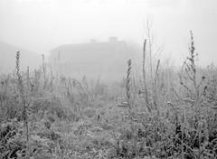 One foggy morning before work. (wojszyca) Tags: fuji fujica gsw680iii 6x8 mediumformat fujinon sw 65mm ilford hp5 hc110 163 gossen lunaprosbc epson v800 fog house vegetation grass