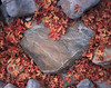 Heart of Stone (AlexBurke) Tags: utah zion heart stone landscape detail closeup film 4x5 large format provia autumn maple leaves