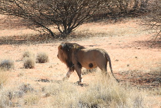South Africa Hunting Safari - Northern Cape 88